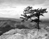 gallery33-awesome_lonely_trees-1
