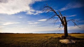 gallery33-awesome_lonely_trees-11
