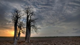 gallery33-awesome_lonely_trees-7